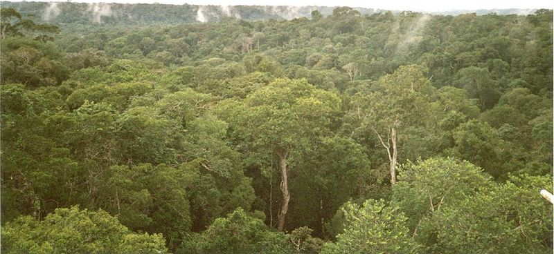 Civilization beneath the amazon forest heather pringle as sciox Image collections