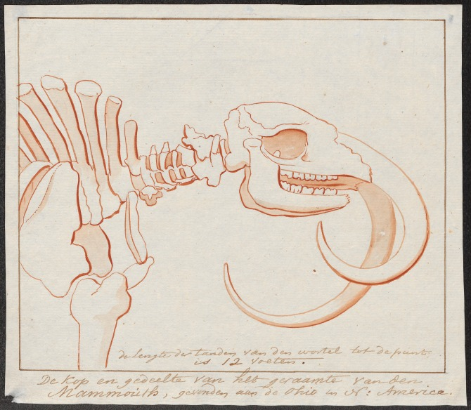 Mammuthus_spec._-_skelet_-_1700-1880_-_Print_-_Iconographia_Zoologica_-_Special_Collections_University_of_Amsterdam_-_UBA01_IZ22000159.tif